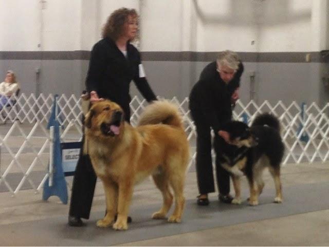 How Much Do Dog Show Winners Make