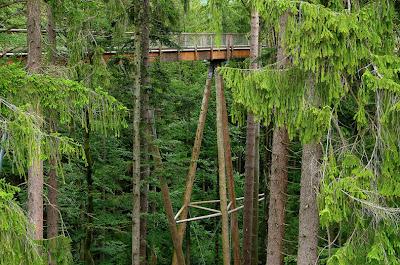 bavaria-treetop-walk-3