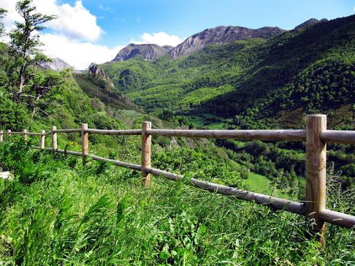 Ganador Floro -  Titulo : El verdor de los bosques en primavera