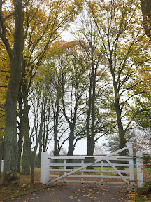 Trees and gate