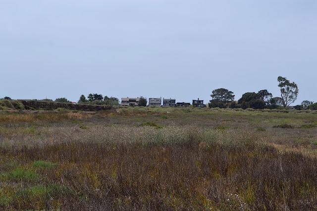 fairly dry marshland
