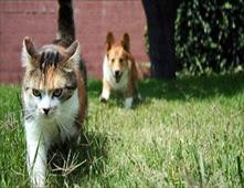 قط يخدع كلب بحركة بهلوانية