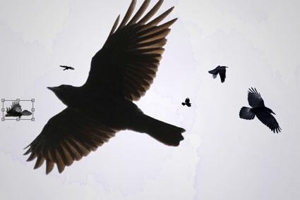 Várias imagens de corvo coladas no documento