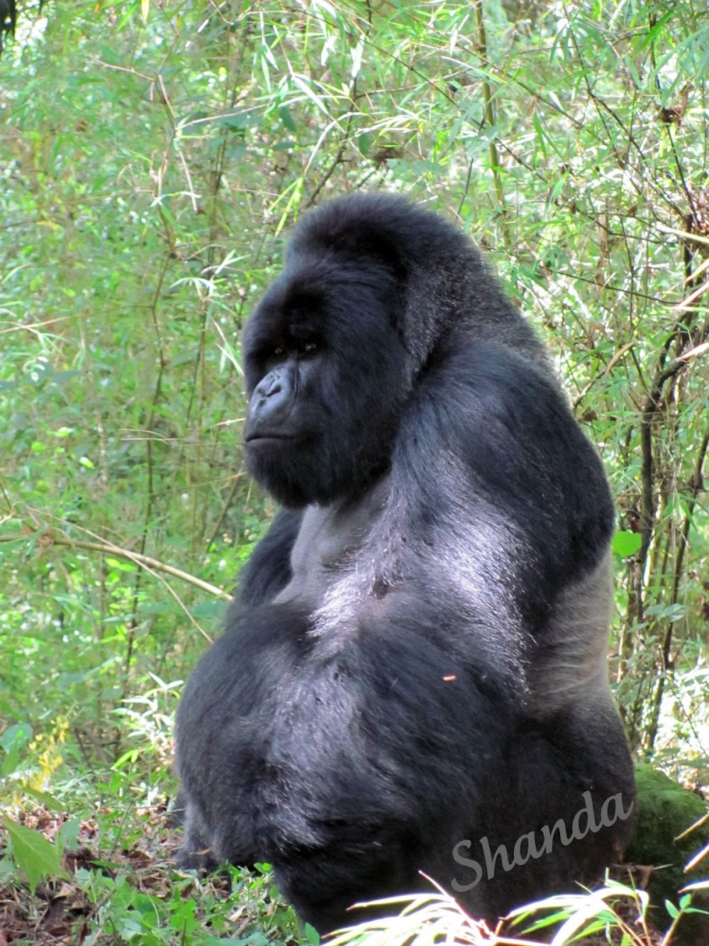 Gorilla Trek in Rwanda / In Search of Beauty Photo Blog Hop