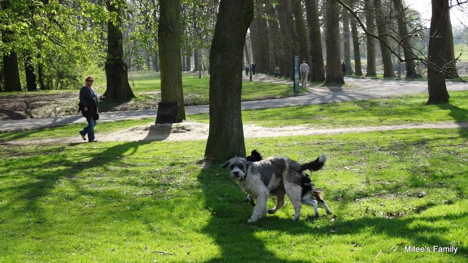 Balades canines en Nord (59)/Pas de Calais (62) - Boulogne-sur-Mer, Calais et Lille - Page 4 DSC01823