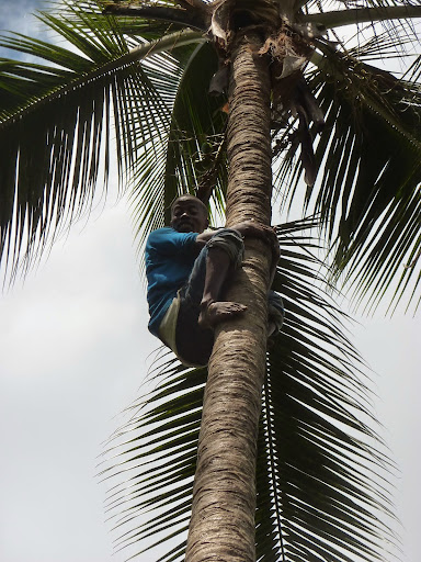Jambo! Climbing a tree at the plantation. From Through the eyes of an educator: Zanzibar, Tanzania