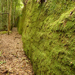 Moss Wall near the Boarding House Dam in the Watagans (322733)