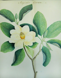 A watercolor illustration of a magnolia branch, including a blossom, bud, and leaves.