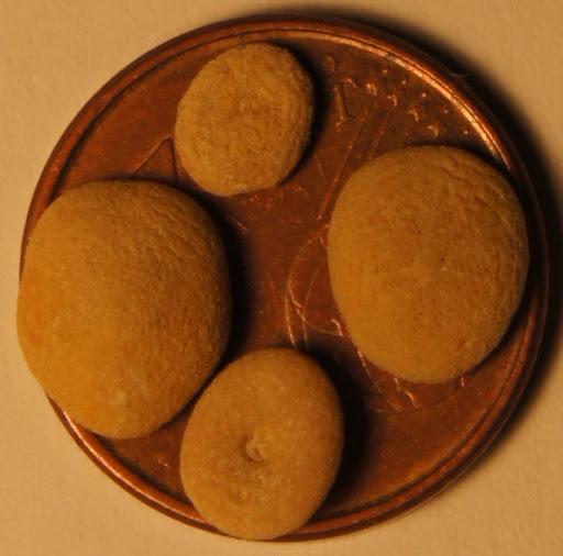 Lo que cabe en un céntimo Echinocyamus