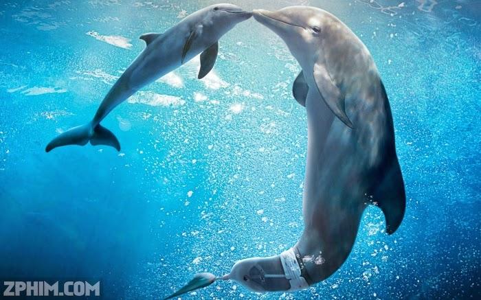 Ảnh trong phim Câu Chuyện Cá Heo 2 - Dolphin Tale 2 5