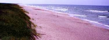 Ostsee-Strand bei Schwarzort/Juodkrante, Kurische Nehrung, Litauen