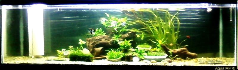 Meu Plantado 200x60x60 800 Litros Foto-0049