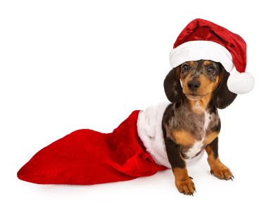 Stocking Fillers For Your Dogs, luxury dog toys and more!