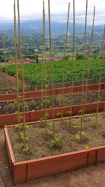 Tutores para arboles tutor espaldera cm uds with tutores - Tutores para tomates ...