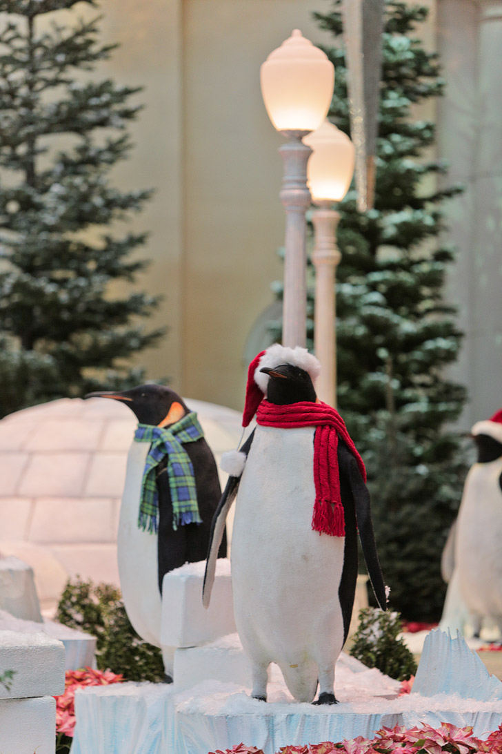 Penguins at the Bellagio Gardens // Las Vegas Christmas.