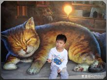 雲林虎尾-屋頂上的貓