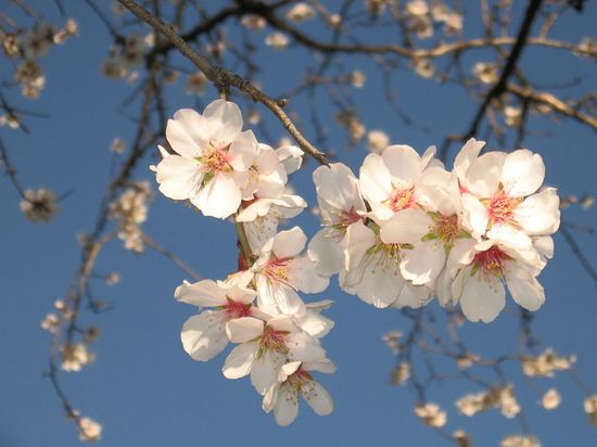 Piante e fiori le spermatofite for Piante e fiori