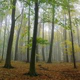 Setas - En el bosque de las Amanitas muscarias