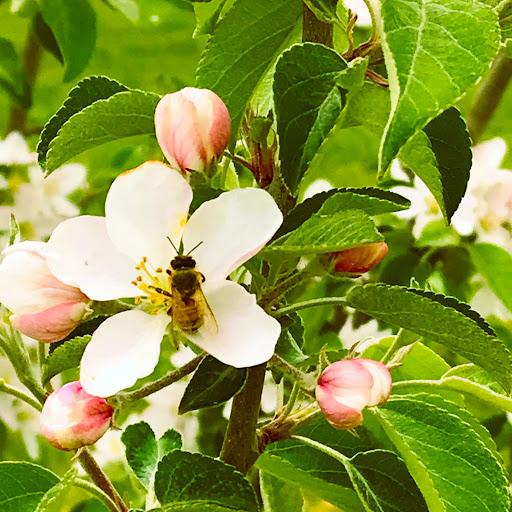 Nancie McKinnon Profile Image