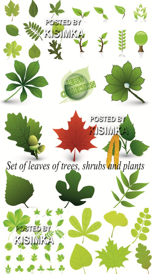 Stock: Set of leaves of trees, shrubs and plants