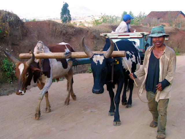 صور من مدغشقر Madagascar 14850533383