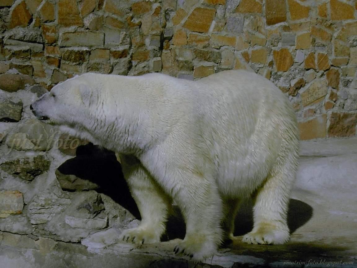 Зоопарк белые медведи фото Санкт-Петербург