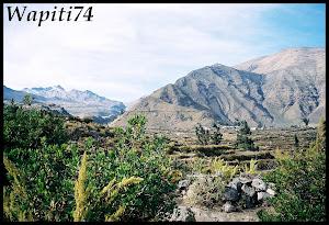 Un mois aux pays des Incas, lamas et condors (Pérou-Bolivie) 031%2520%252811%2529