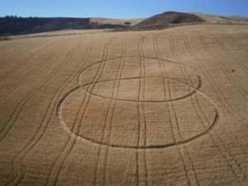 Signs And Symbols Crop Circle Formation Appears Near Enna Sicily Italy June 16 2013
