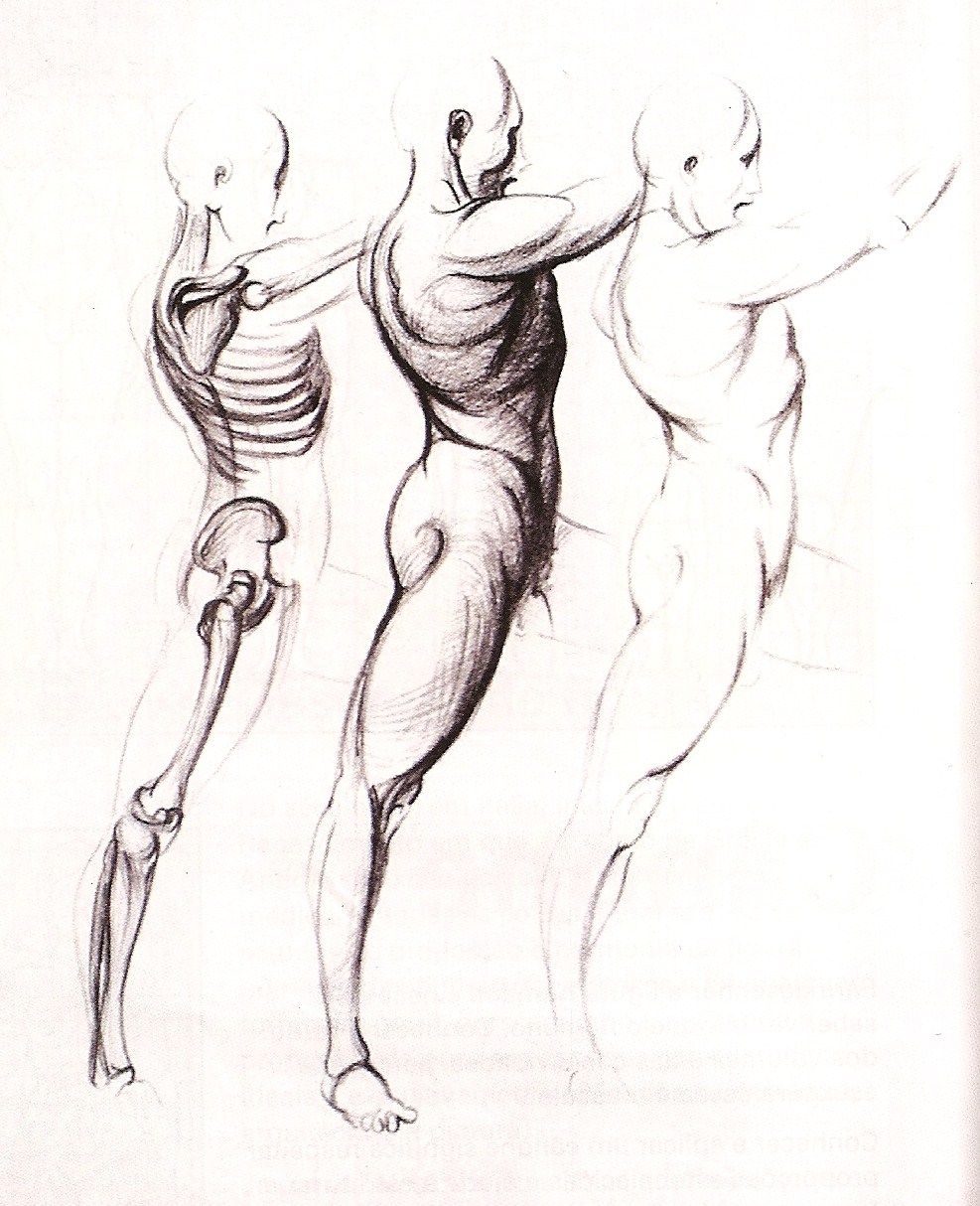 Human Body In Drawing The Figure