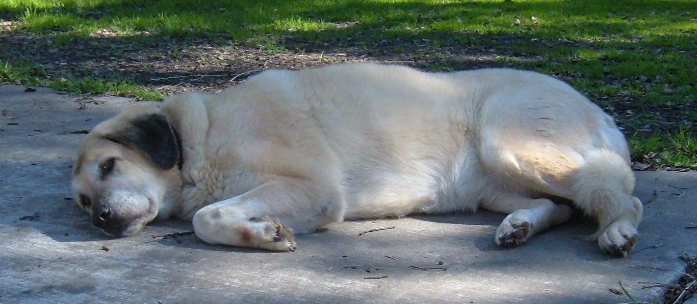 Big Dog Rescue Bay Area Ca