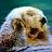 zach holzschuh avatar image