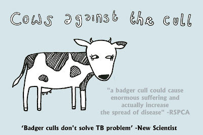 cows against the cull badger wales fritha strickland illustration