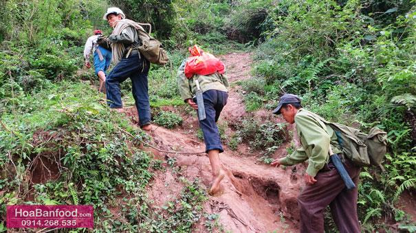 Khai thác Mật Ong Rừng ở Lai Châu - 5