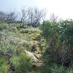 Track leading up ridge (262610)