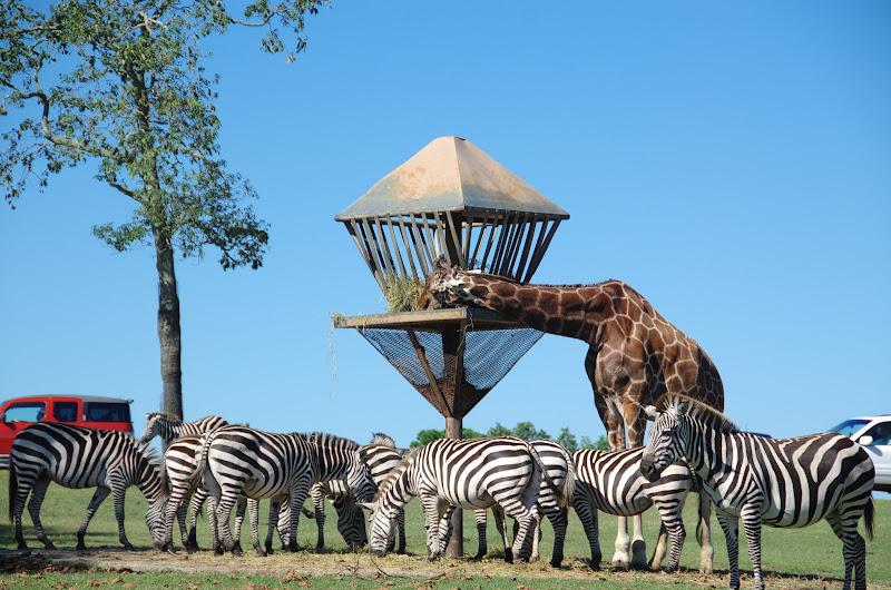 六旗野生動物園動物寫真 - Six Flags Wild Safari