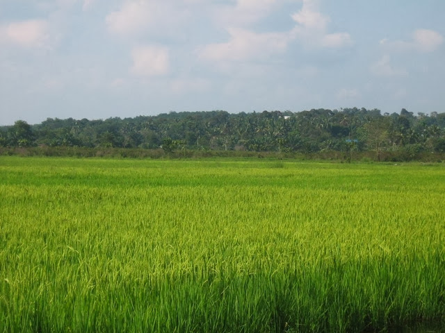 Kahang-Organic-Rice-Eco-Farm
