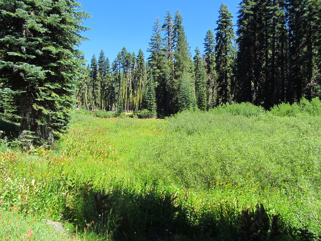 big meadow as the trail flattens out