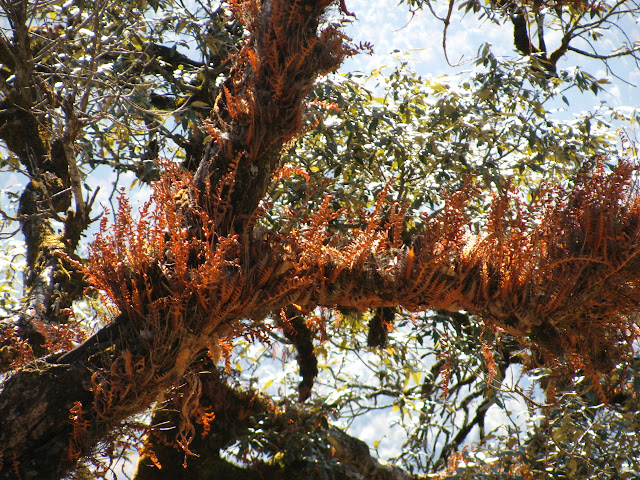 ferns growing on the tree branches