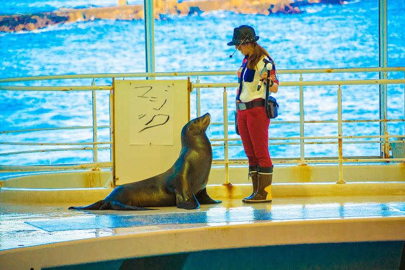 アクアワールド大洗水族館 イルカ・アシカオーシャンライブ 写真5