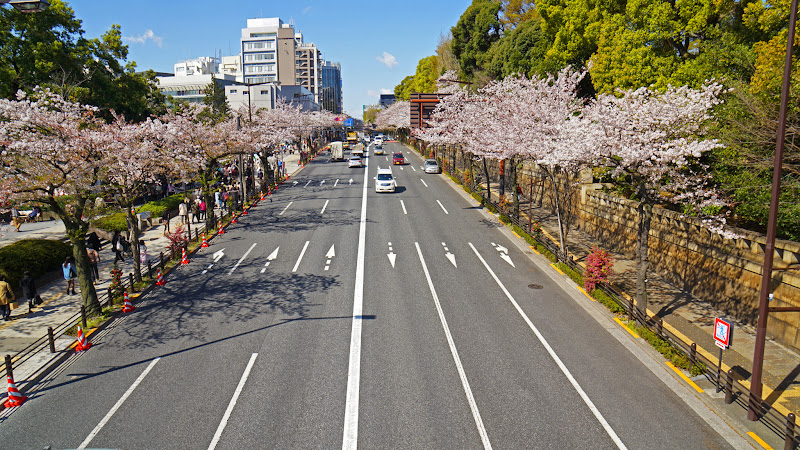 千鳥ヶ淵 桜 写真7