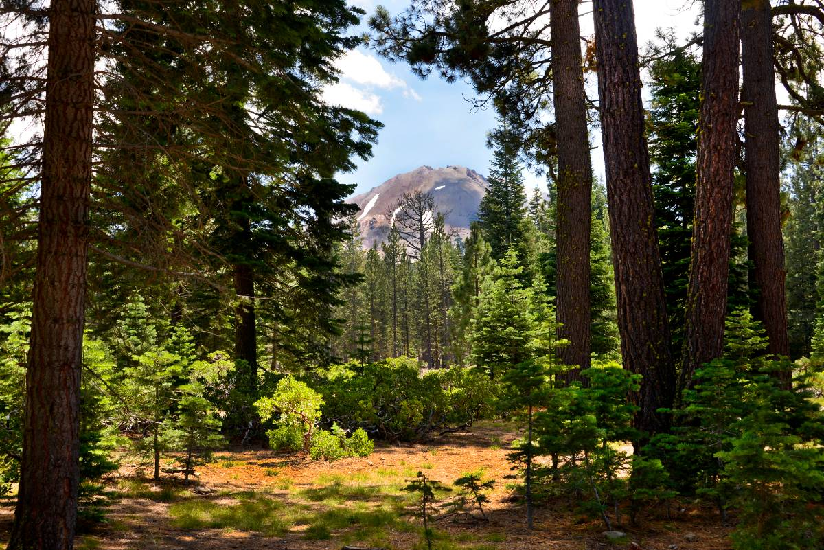 Mount Lassen through trees in one of the lesser-known California national parks, Lassen Volcanic