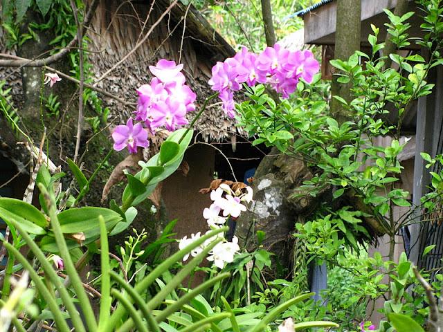 Из зимы в лето. Филиппины 2011 - Страница 5 IMG_0055