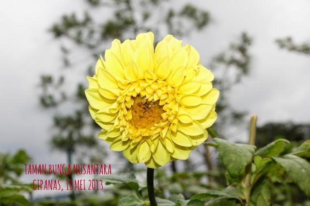Taman Bunga Cianjur Cipanas