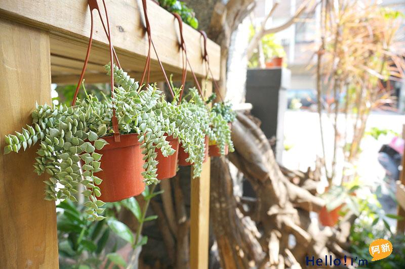 台南盆栽店,日光夏蘭植物工房-7