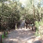 heading through the mangroves (77473)