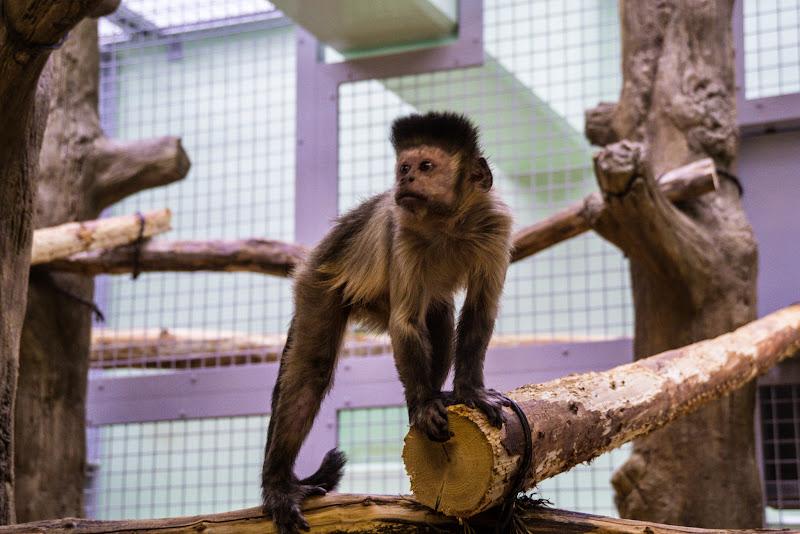 札幌 円山動物園 写真9