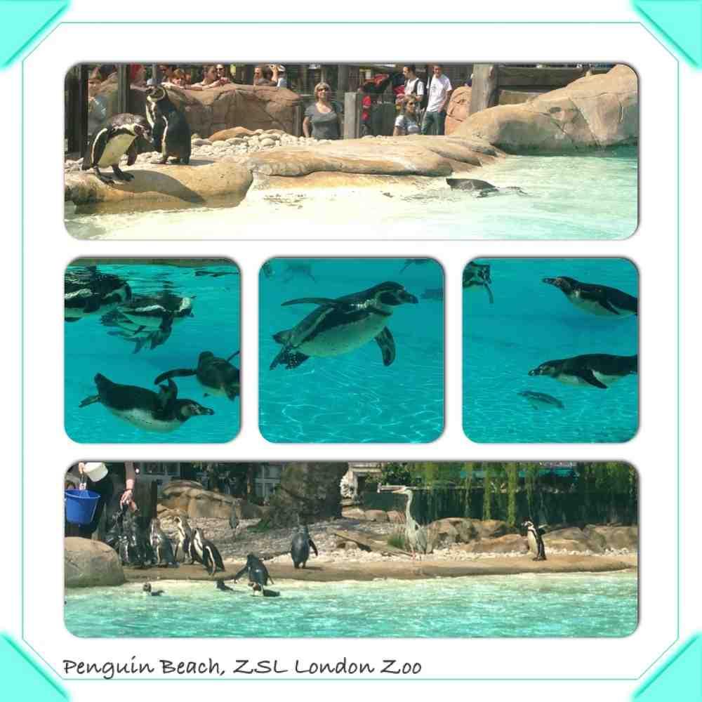 London-Zoo