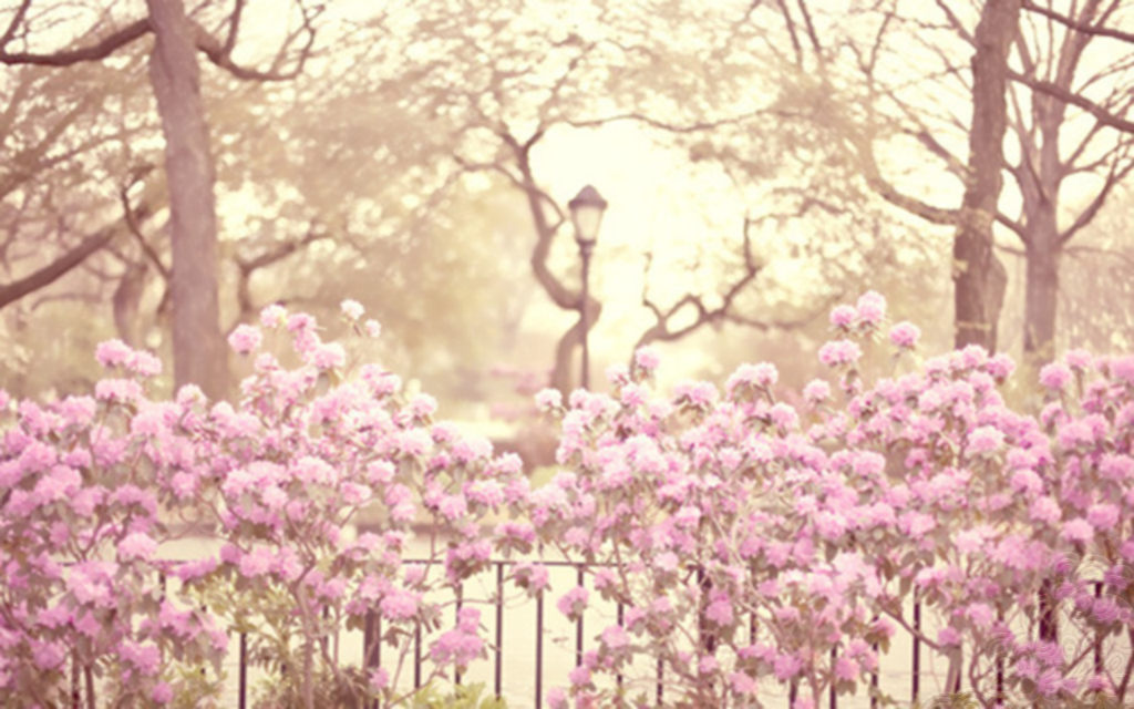 Portadas para FaceBook vintage flowersVintage Photography Flowers Facebook Covers