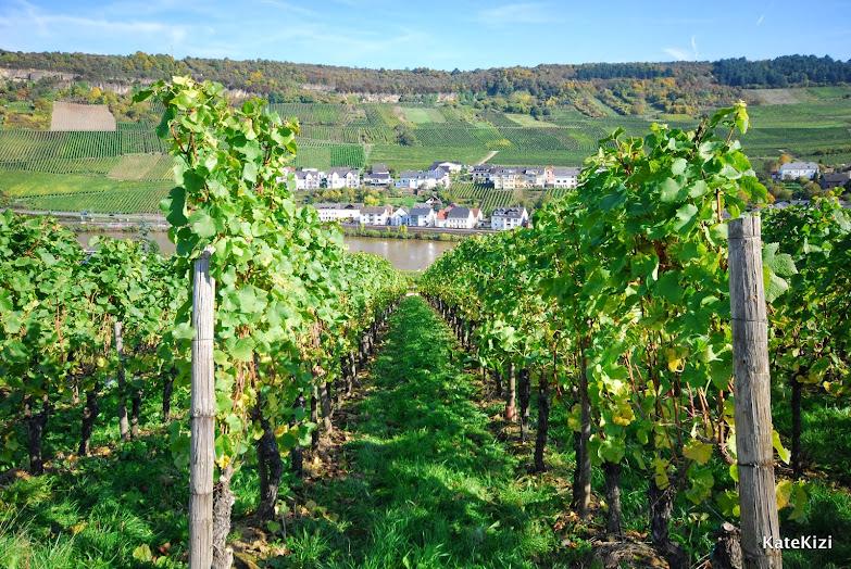Все холмы вдоль Мозеля засажены виноградом. Вино получается отменное - Pino Gris, Pino Noir, Gewurztraminer. Одни из моих любимых