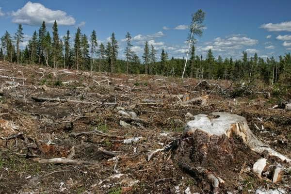 ทำลายป่า